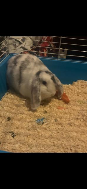 Phoebe's new pet Millie