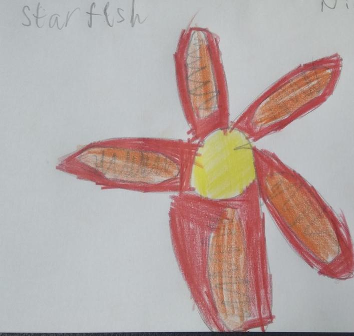 Fantastic starfish Nikolai