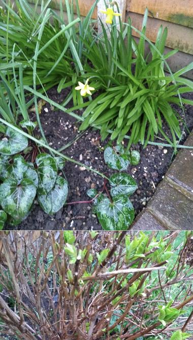 Edward found signs of Spring in his garden