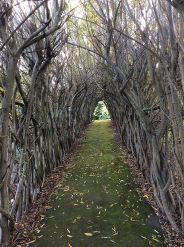 Our magnificent willow tunnel ready to be trimmed and storage for craft workshops