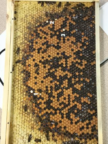 Can you spot the queen bee?
