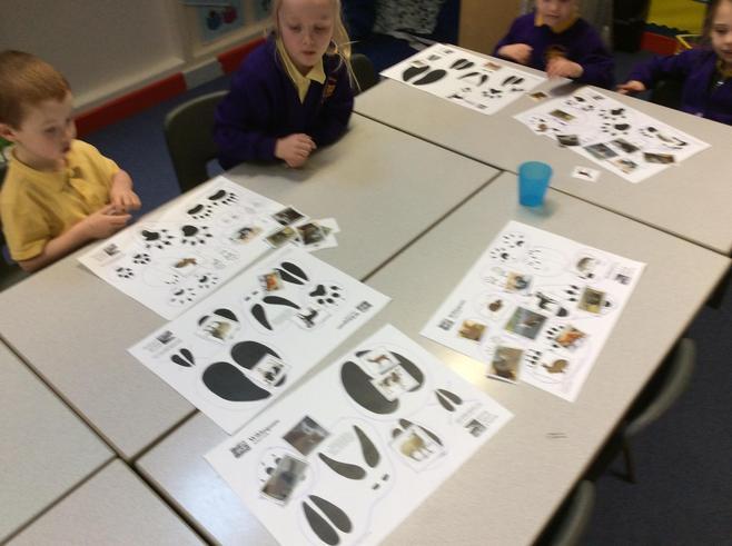 Looking at the prints animals make.
