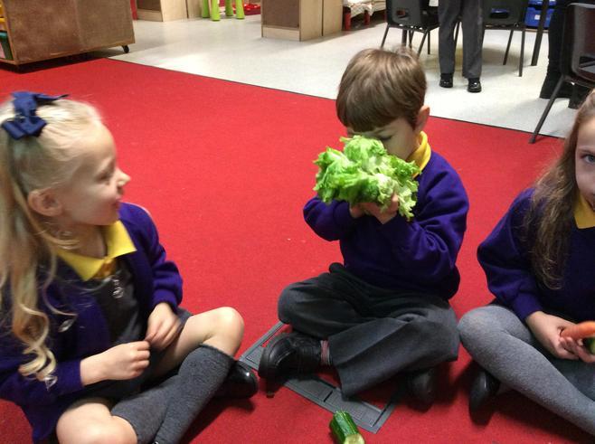 Peter Rabbit crunched on crispy lettuce!
