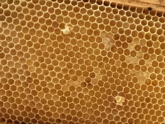 Honeycomb made by the honey bees