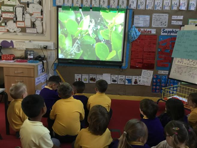 Insect documentary to inspire our writing