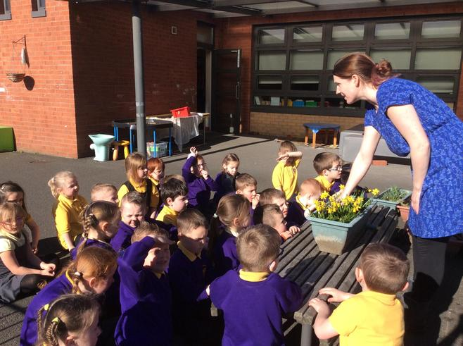 We looked at our daffodils and the different parts