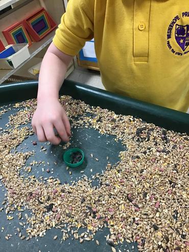 Exploring bird seed
