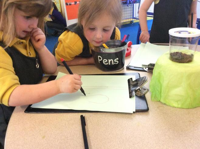 Lovely observational drawing