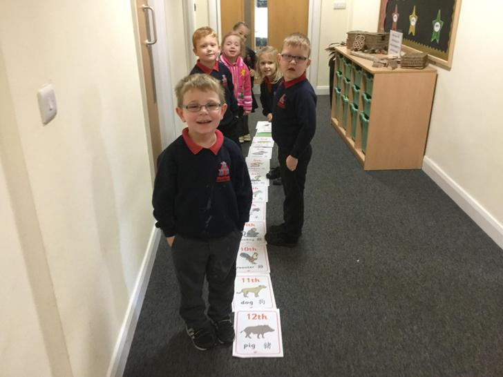 Ordering the animal race using ordinal numbers