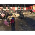 School dog wanders around