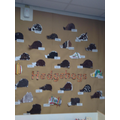 Y1 Hedgehogs