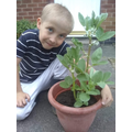 Vinnie's bean plant from his home learning task.