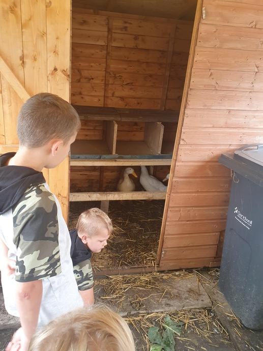 Amelia-Lilly visiting the chicken shed