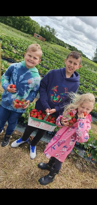 Amelia-Lilly, Oscar and Alfie picking strawberries
