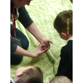 Learning about tarantulas.