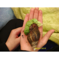 Learning about African Land Snails.