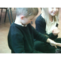 Learning about stick insects.