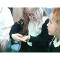 Learning about stick insects.Learning about stick