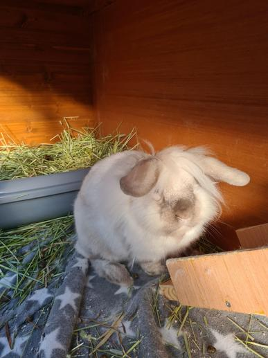 Harry - Teigan's Rabbit
