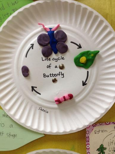 Play dough Life Cycle