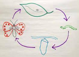Drawn Life Cycle