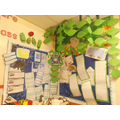 'Leaf' display linked to environment and habits