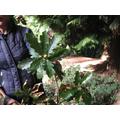 Barbara showing us an oak branch.