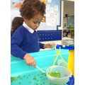Exploring frozen peas in the water tray