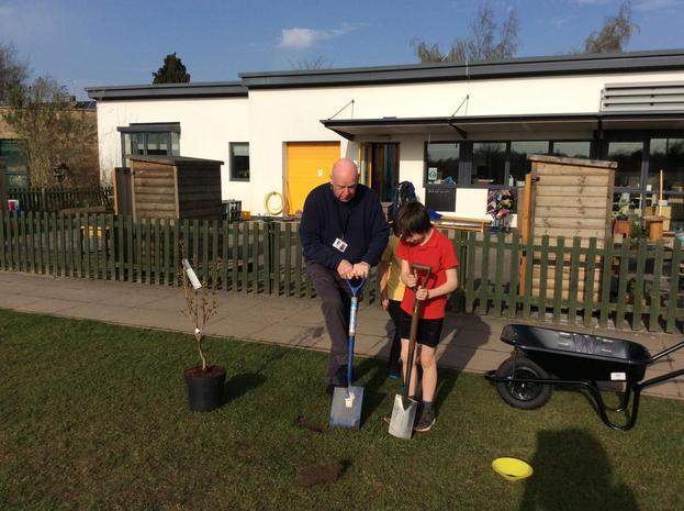 Two boys preparing to plant a blossom tree