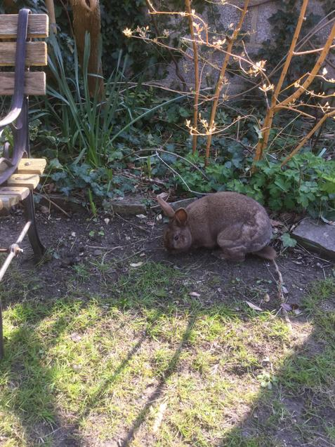 This is Fluffy in the garden
