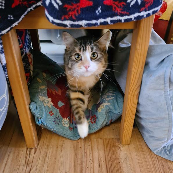 Amelia's cat Luna loved her new den!
