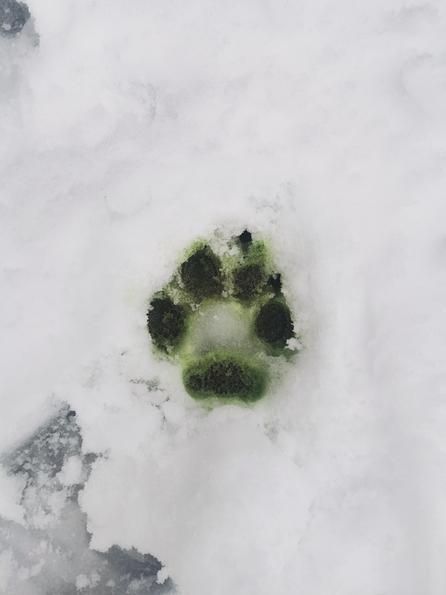 Wyatt's dogs foot print