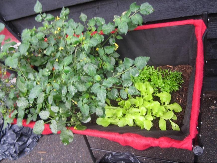 We're growing lettuce and carrots too.