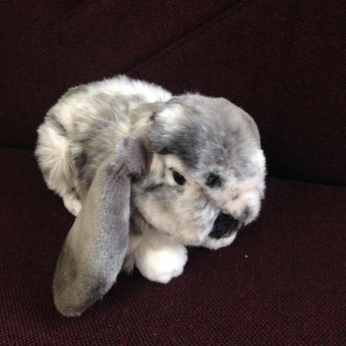 Relationship Rabbit