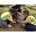 Year 4 seaweed investigations