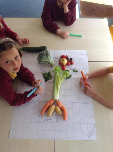 Matching common fruit and vegetables to parts of a plant.