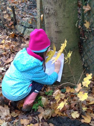 Bark rubbing in Forest School