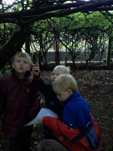 Investigating and naming different trees and leaves