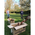 Rescued battery hens arriving