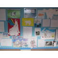 Classes 6 and 8 researched arctic animals