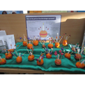 Our very own Christingles