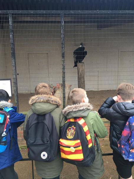 At the International Birds of Prey Centre