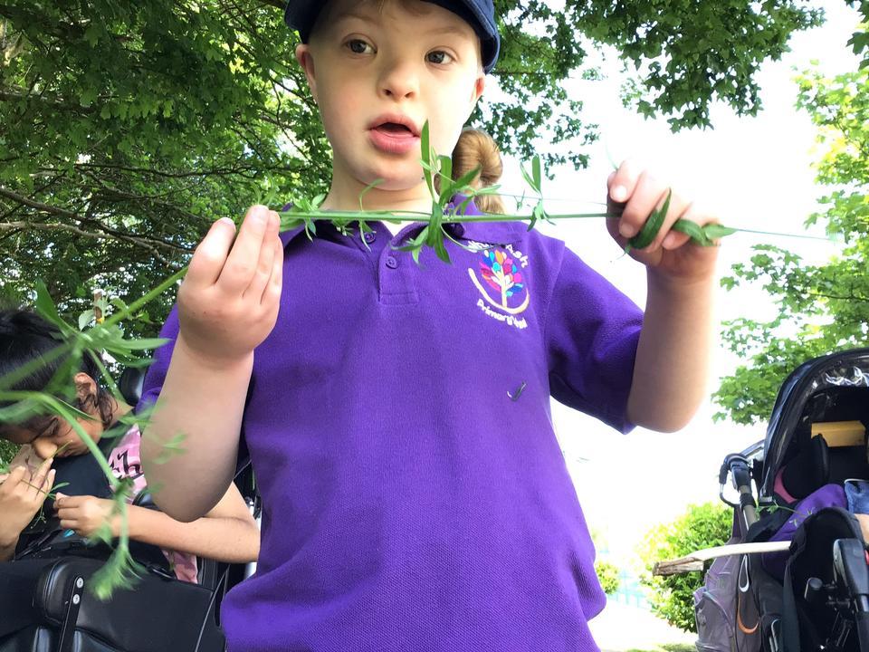 Finding sticky plants!