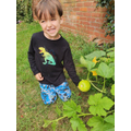 Edward is growing a pumpkin!