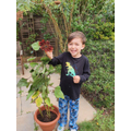 Edward is also growing sunflowers.