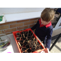 Look how well our seeds are growing!
