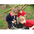 We planted our seeds from home learning.