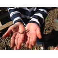 Nature in our hands