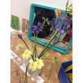 Observational Painting of Spring Flowers