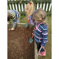 Digging the allotment